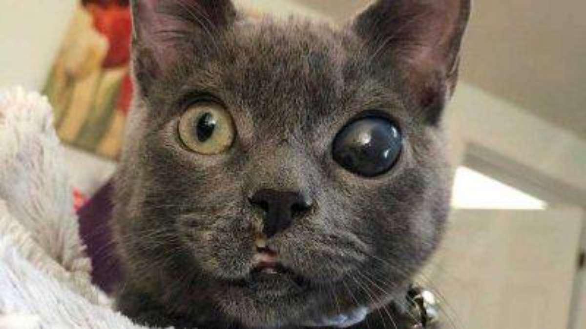 Pupille dilatate del gatto le cause e gli opportuni accorgimenti