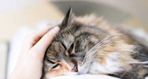 Mal di stomaco nel gatto