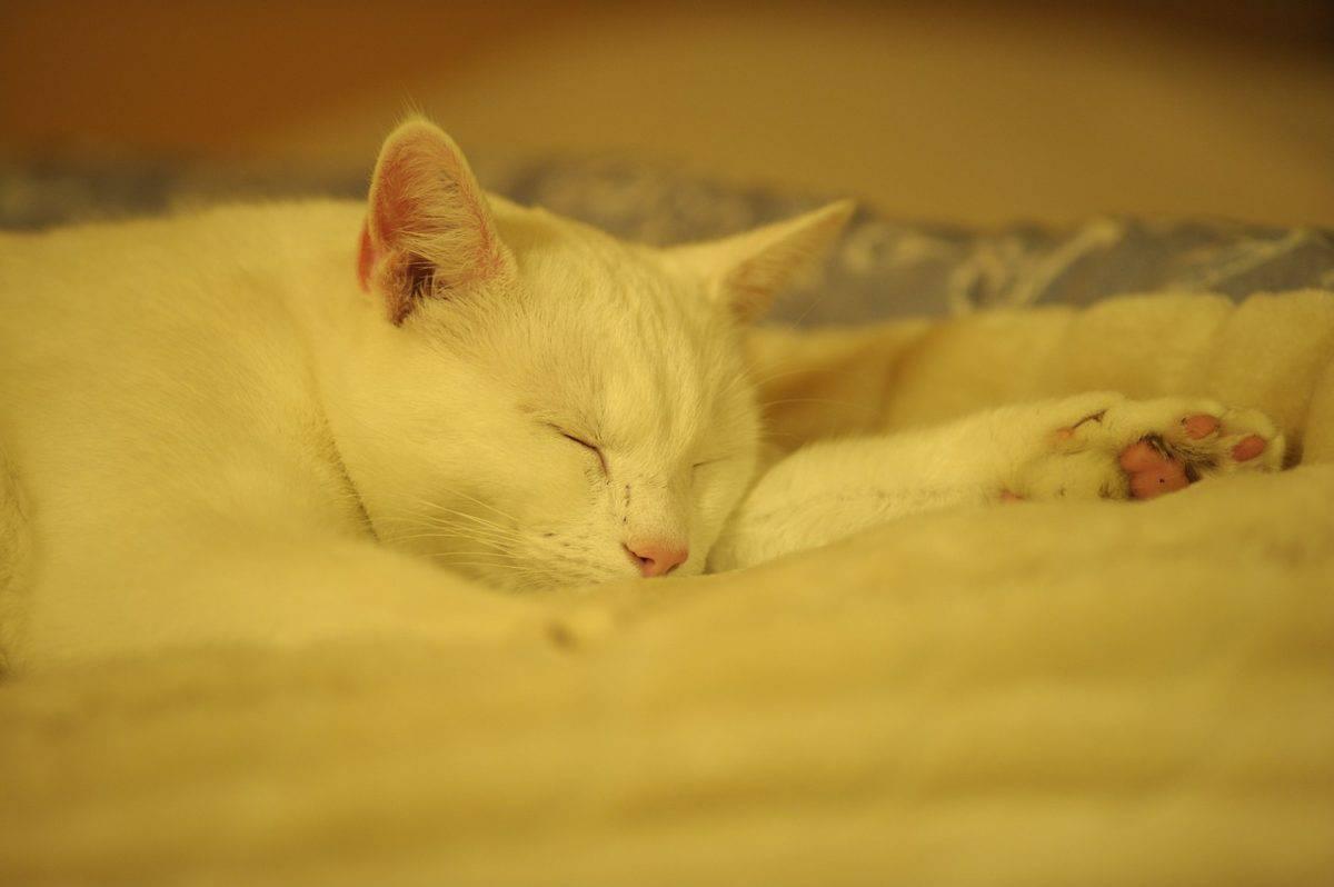 Come riscaldare la cuccia del gatto nei giorni freddi