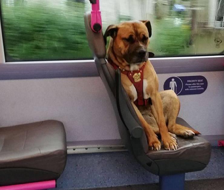 cane abbandonato autobus