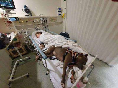 cane ospedale padrone