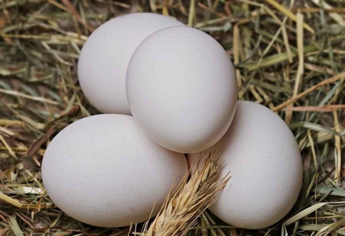 riconoscere un uovo fecondo