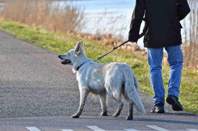 cane anziano a passeggio