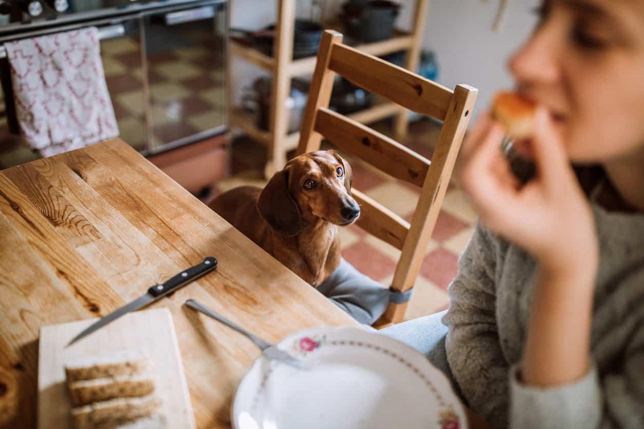 pericoli cucina cane
