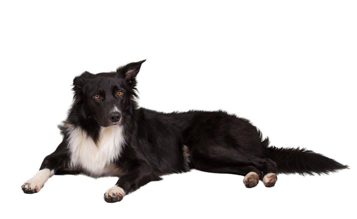 Ernia del disco nel cane classificazione e razze predisposte (foto Pixabay)
