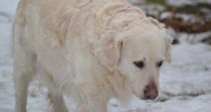proteggere zampe cane dal freddo