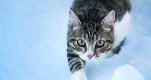 proteggere zampe gatto inverno