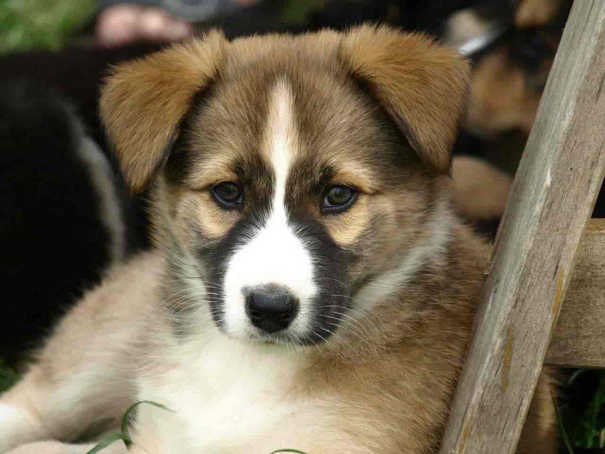 cuccioli cane controlli veterinari