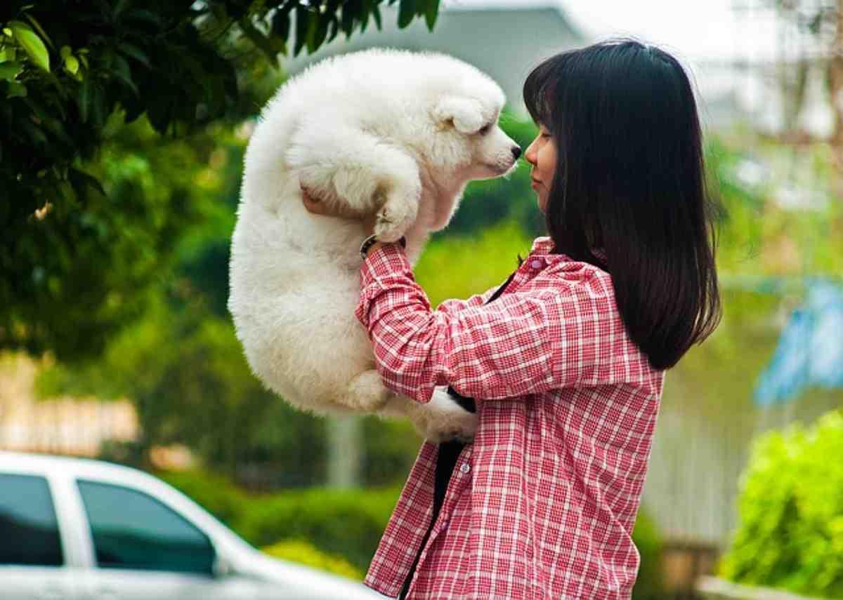 Oroscopo del cane