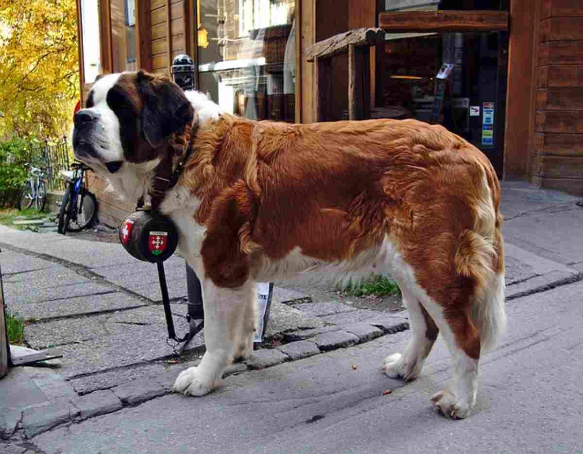 Oroscopo cane del segno della Vergine