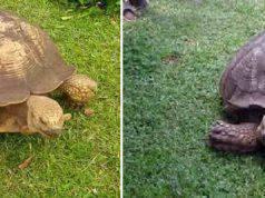 tartaruga più vecchia mondo