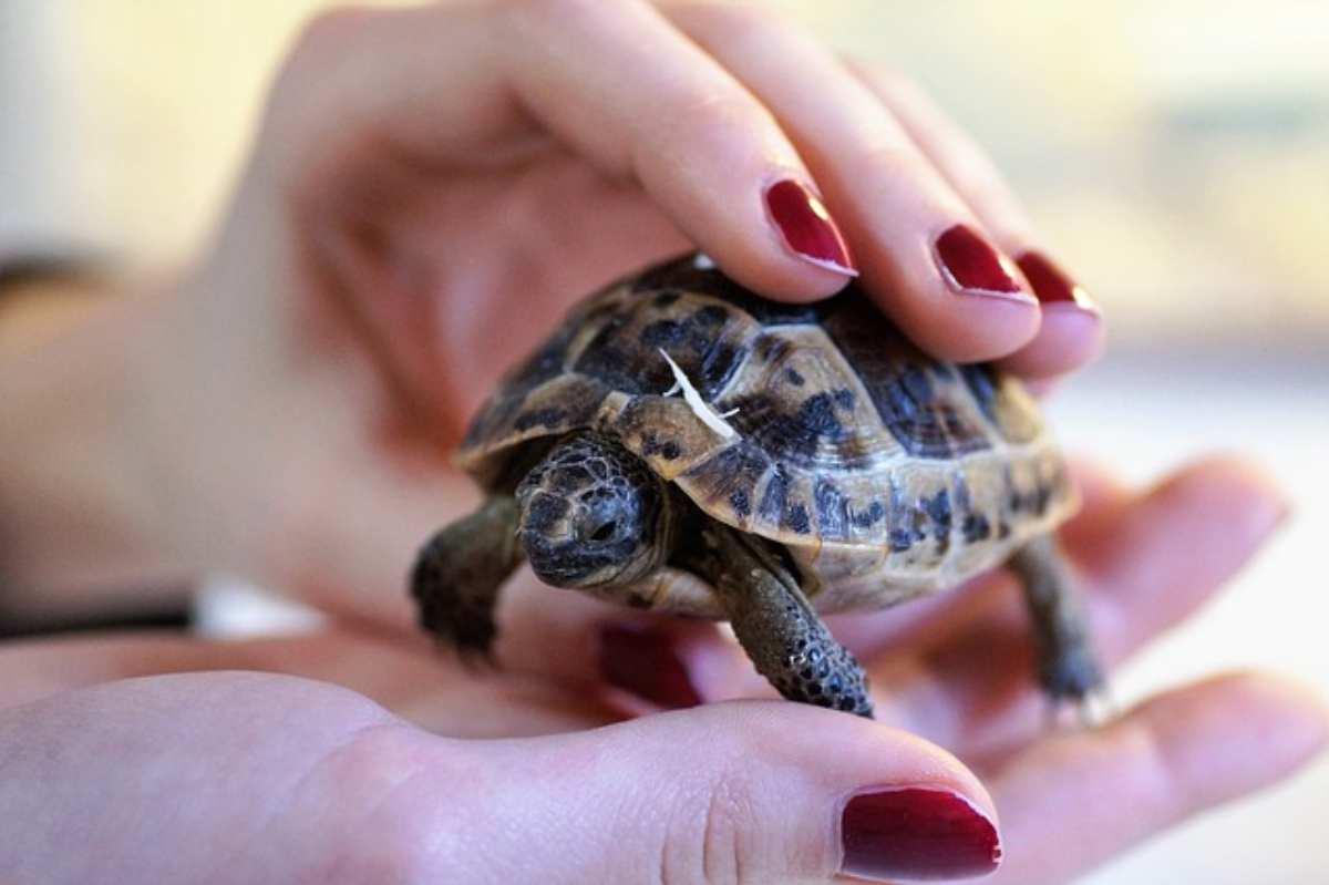 guscio rotto della tartaruga