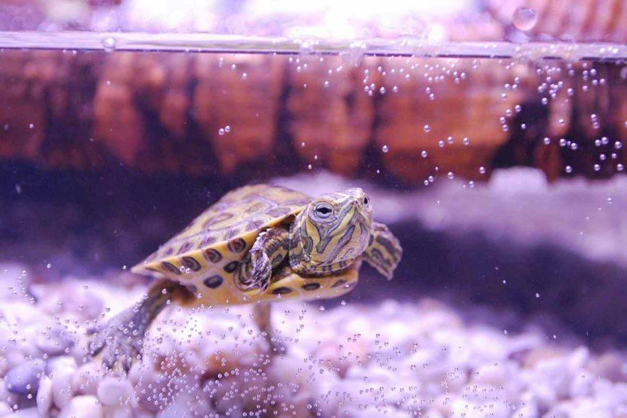 tartarughe manutenzione dell'acqua