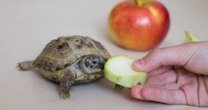 la tartaruga non mangia