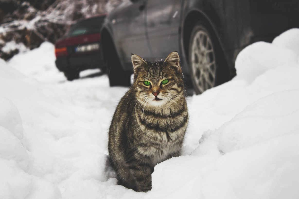 tenere il gatto al sicuro in inverno