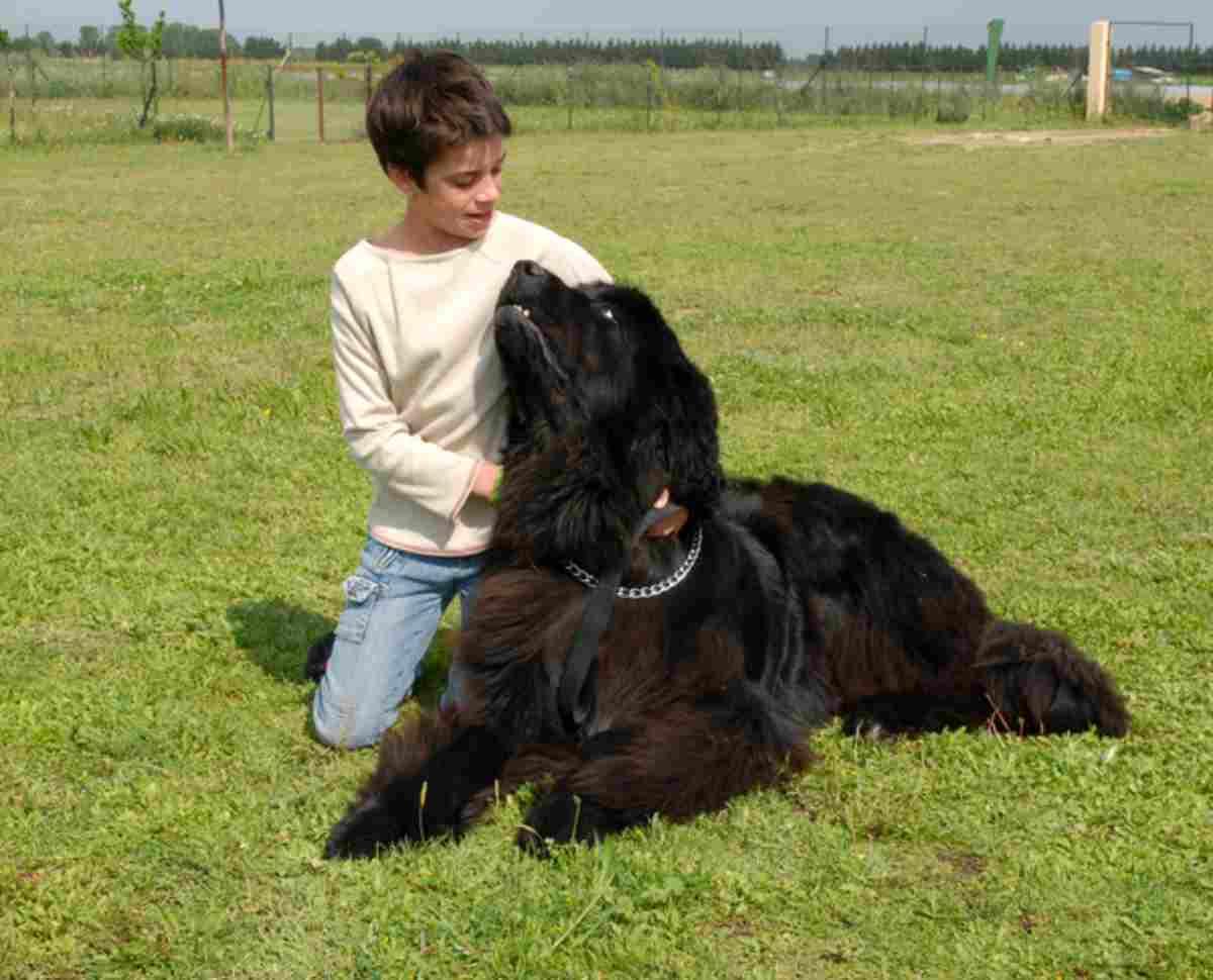 Oroscopo cane del segno della Bilancia