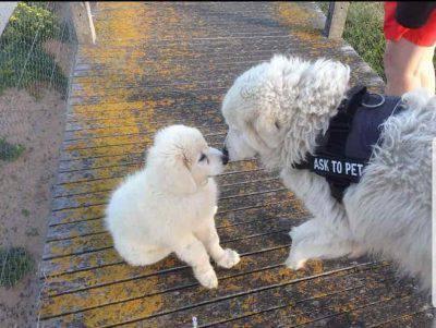 tula addestra cucciolo