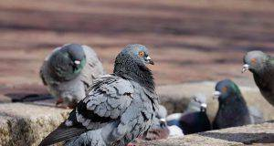 uccelli muovono testa avanti e indietro