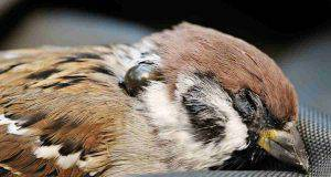 uccellino malato