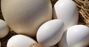 5 uova piu grandi terra mondo