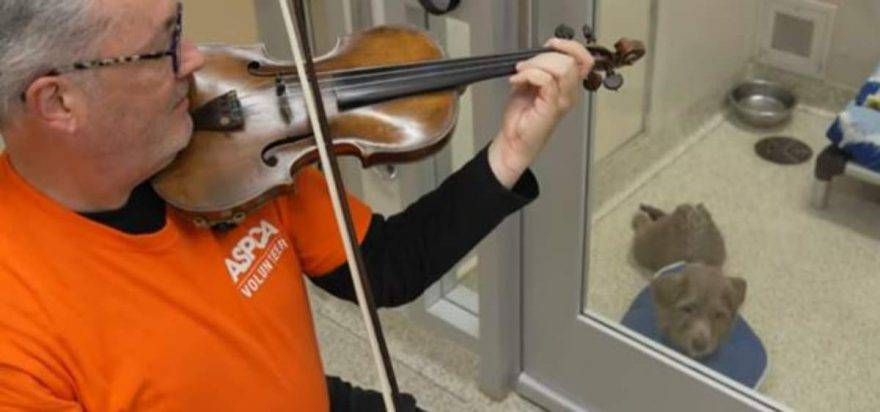 martin agee violino