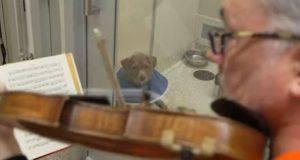 martin agee violino cani