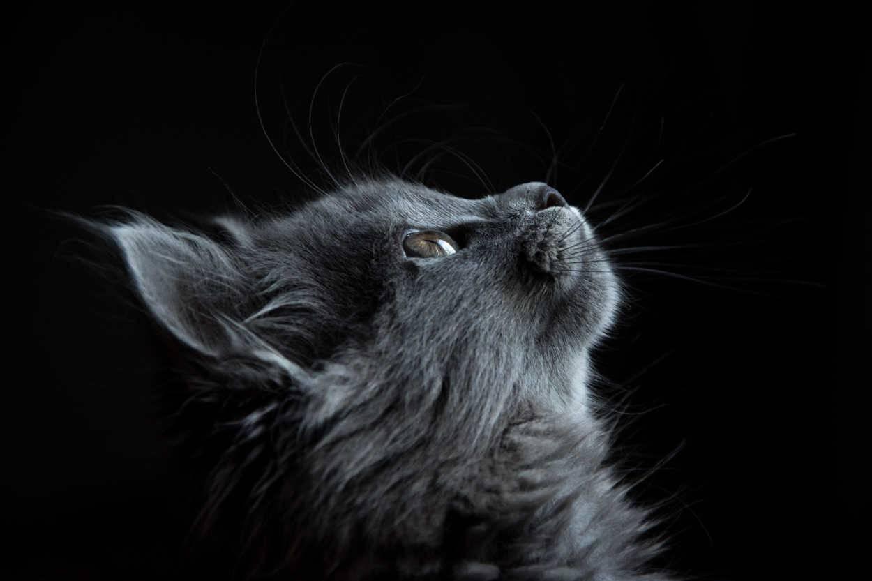 vita media gatto