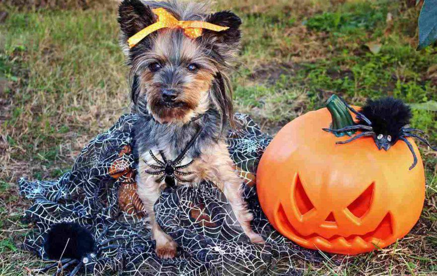 halloween rischi