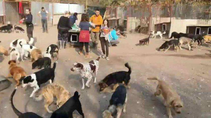 Rifugio per 750 cani Facebook
