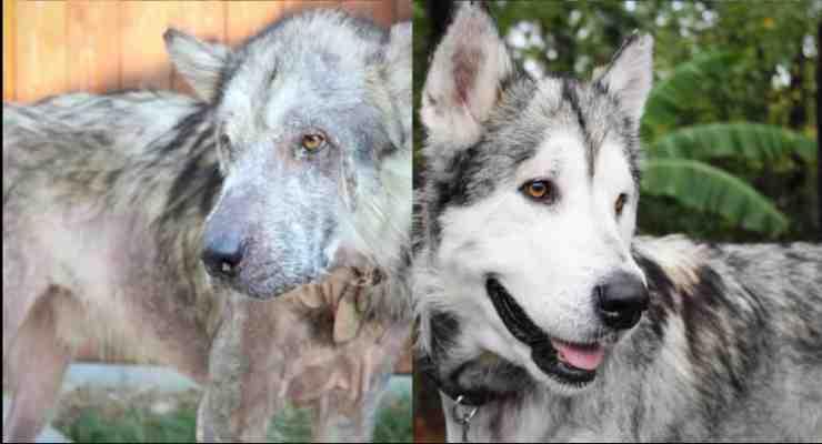 Odin, il prima e il dopo (Foto Facebook)