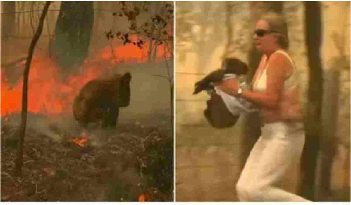 La donna che fugge dall'incendio portando in braccio il koala
