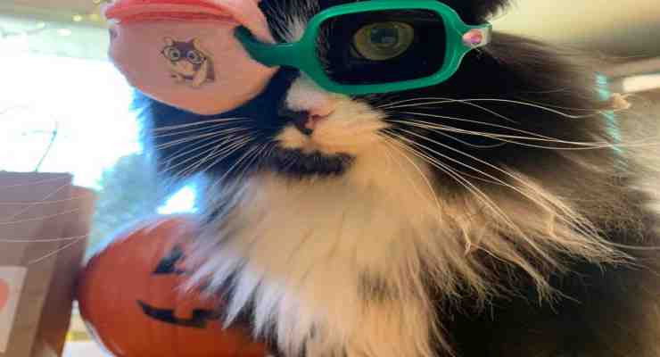 Truffles con gli occhiali (Foto Facebook)