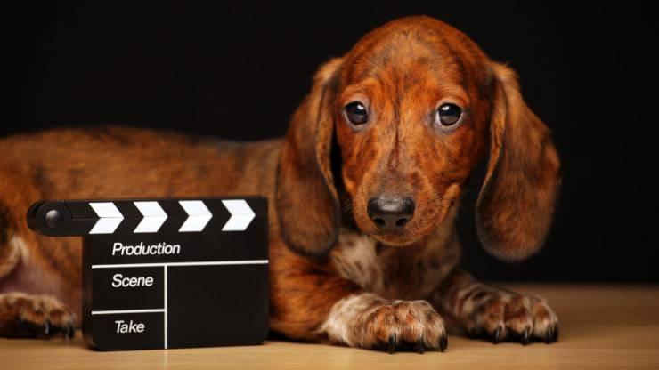 cani protagonisti di film tv e cinema