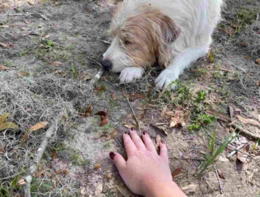 cane traumatizzato
