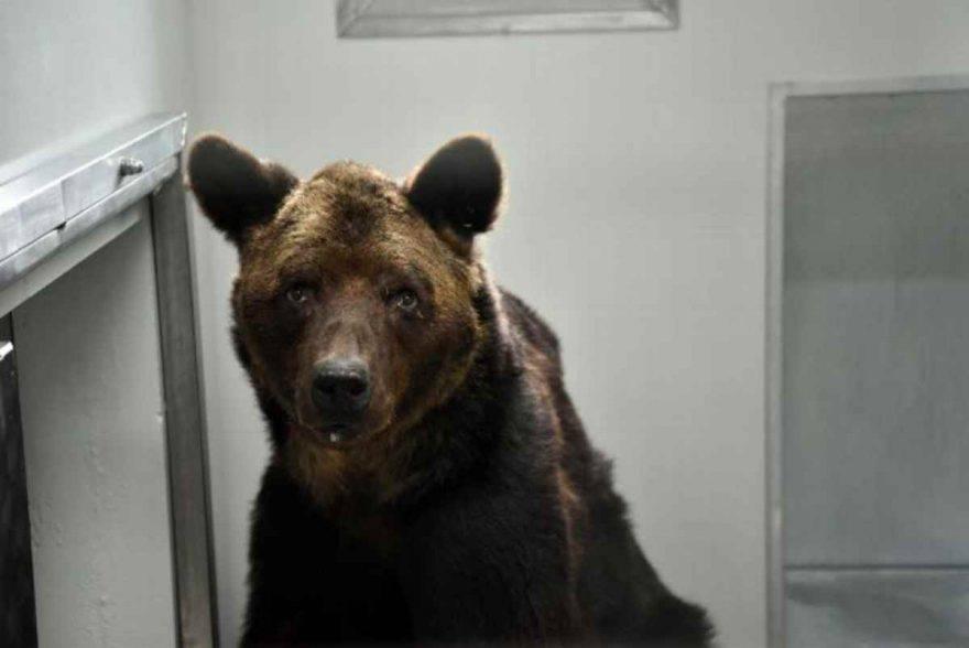 Misha orso circo maltrattato