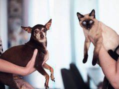 Piu intelligente cane o gatto