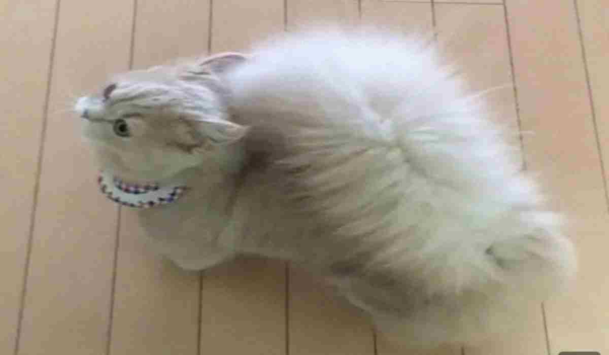 Bell il gatto con la coda da scoiattolo (Foto Instagram)