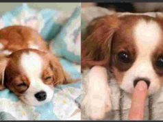 Il cane peluche (Foto Instagram)