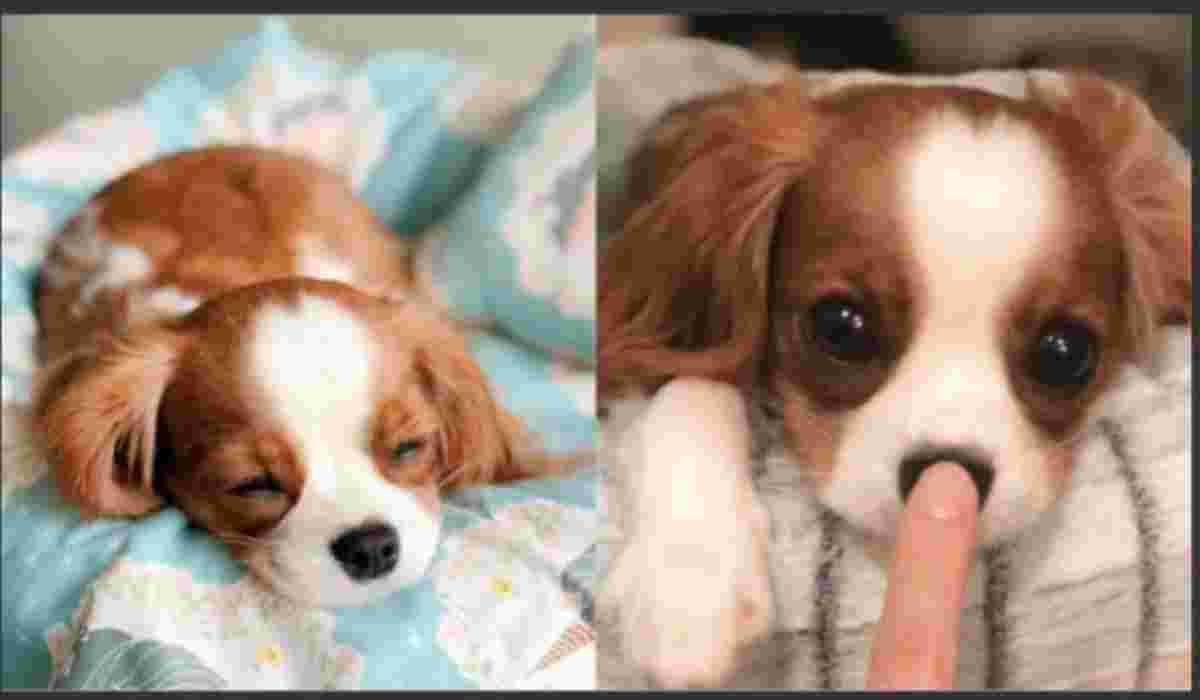 Il cane peluche dall'aspetto dolce e dal tatto morbido, l'unico