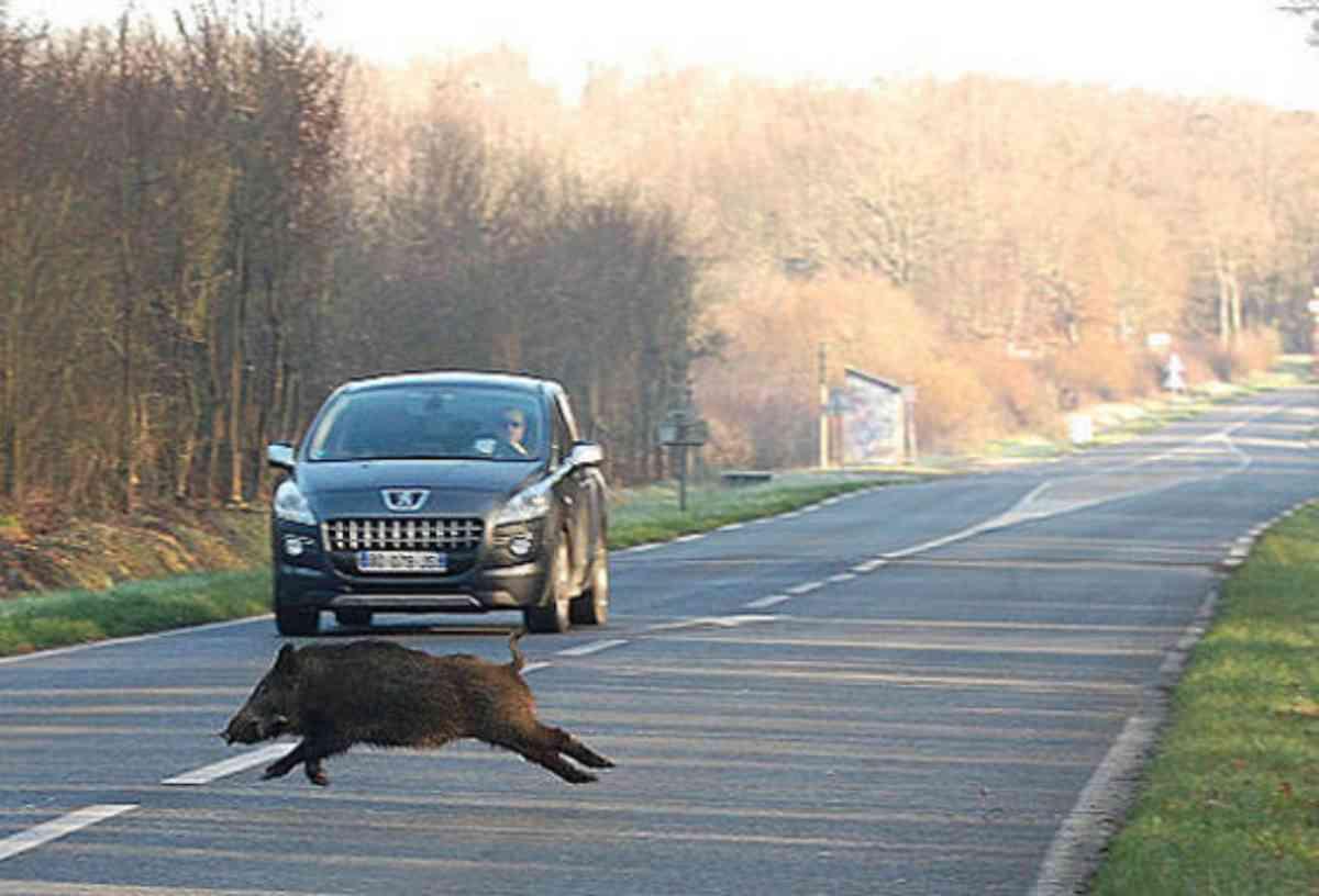 incidenti stradali animali selvatici FB