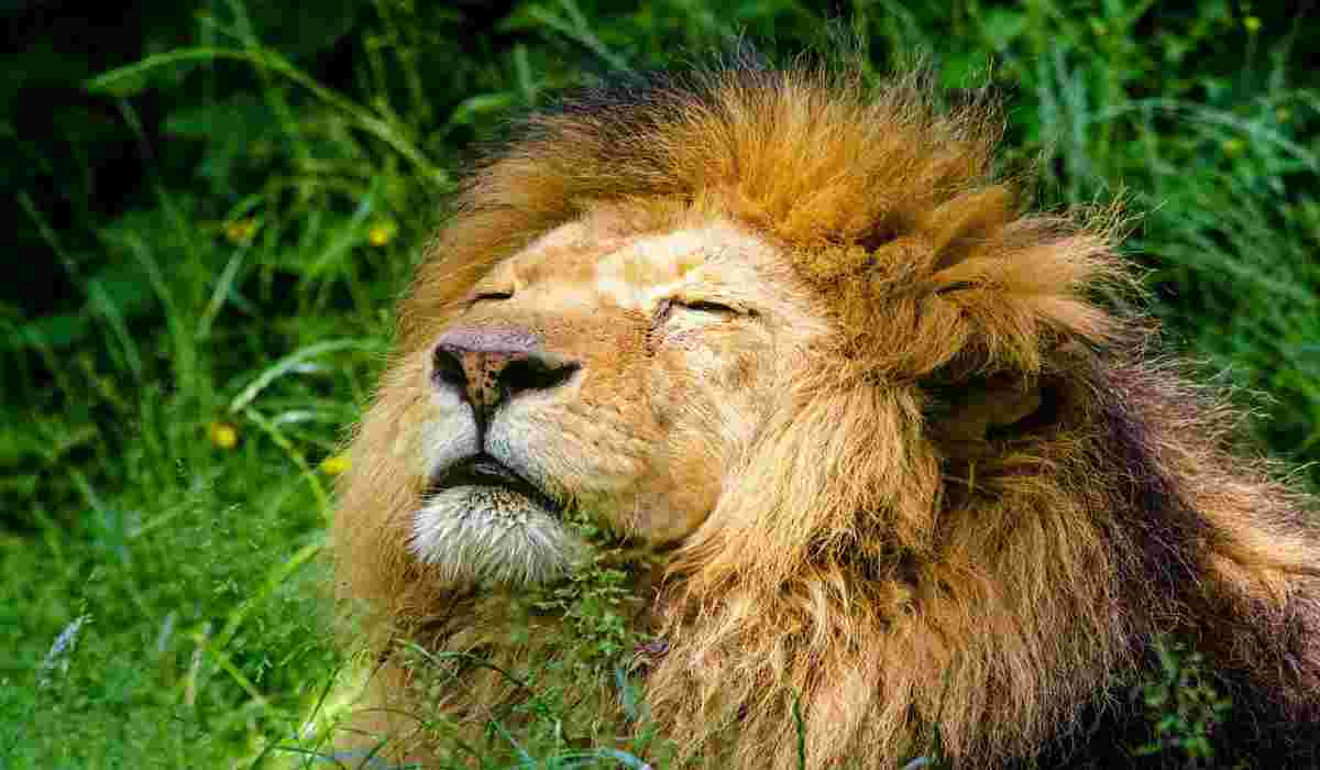 Il sollievo degli animali selvatici (Foto Pixabay)