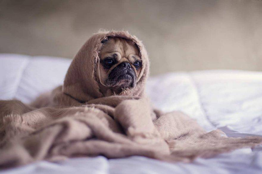 allontanare cane dal letto addestramento
