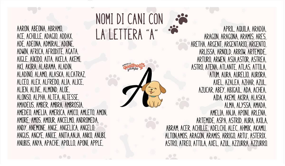 infografica nomi cane con la A