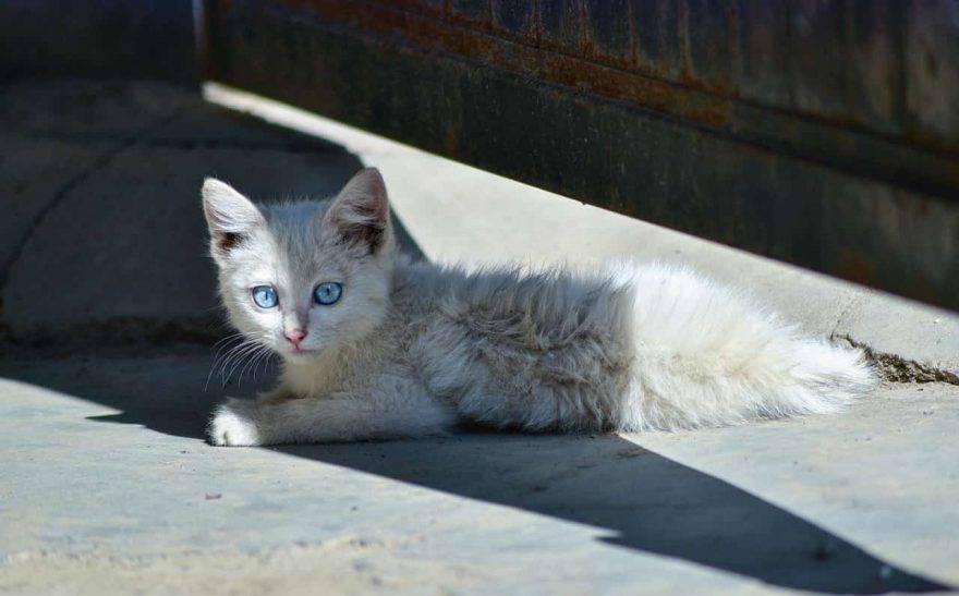 trova gatto strada