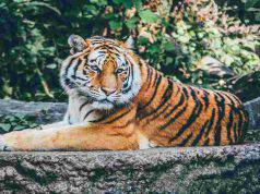 La bellezza dei grandi mammiferi (Foto Pixabay)