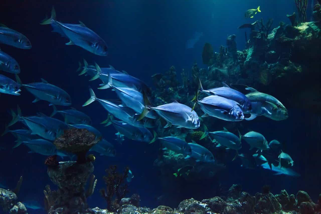 Barriera corallina (Foto Pixabay)