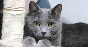 personalità gatto