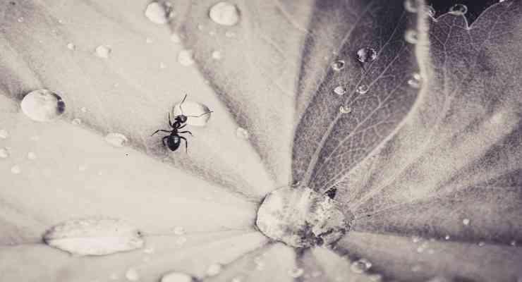 Il fantastico mondo degli insetti (Foto Pixabay)