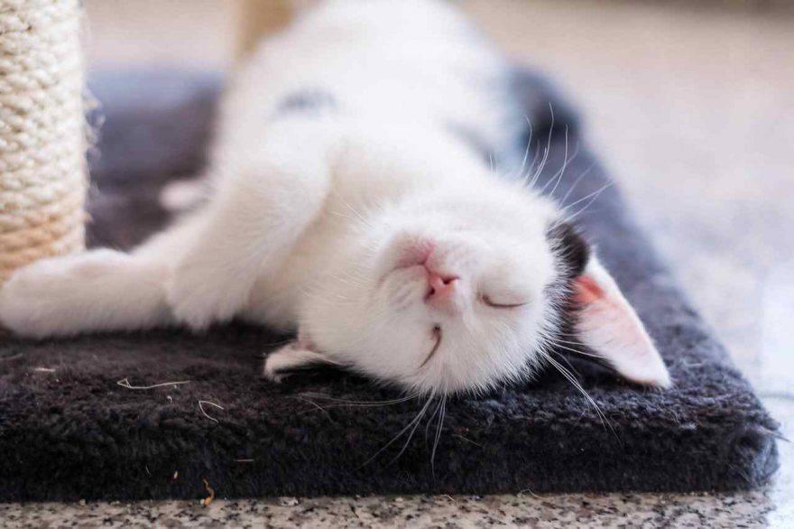 Regali di Natale per gatti a meno di 10 euro