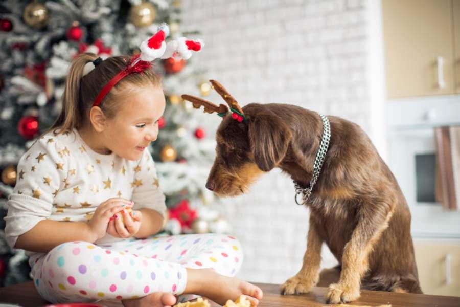 cane mangia dolce